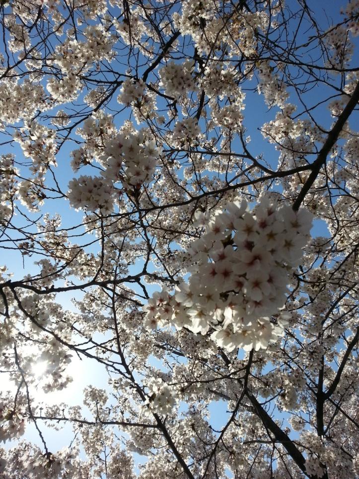 flower n sky